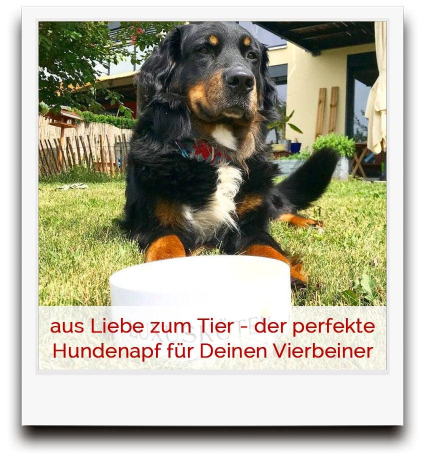 aus Liebe zum Tier - der perfekte Hundenapf für Deinen Vierbeiner